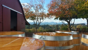 Fall at Springhill Cellars